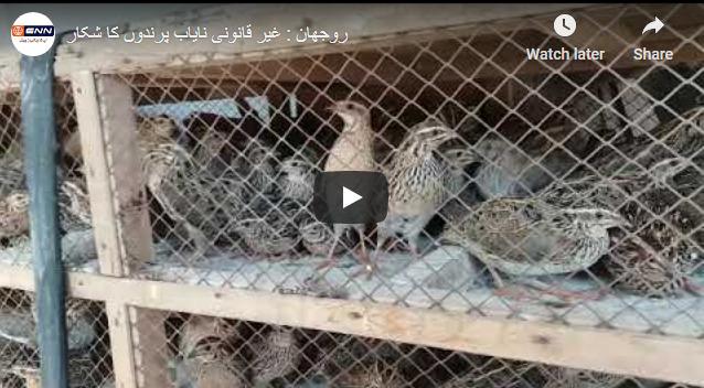 روجھان : غیر قانونی نایاب پرندوں کا شکار