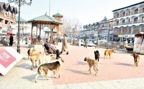 شاردا میں آوارہ کتوں کے حملے