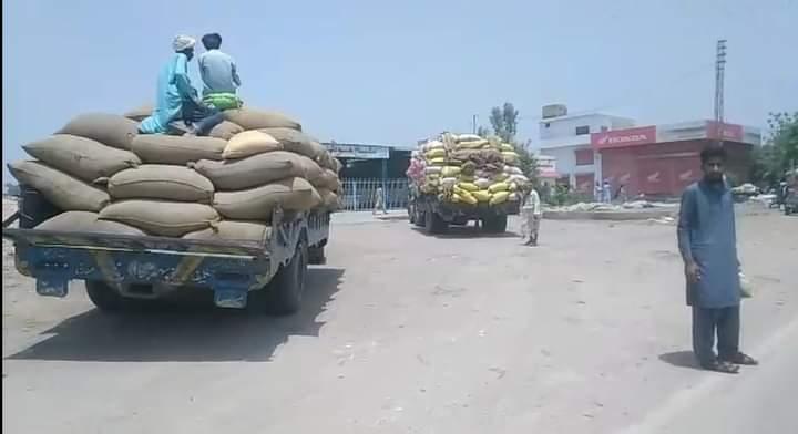 سلطانپور اور گردونواح میں گندم کی فصل کی کٹائی
